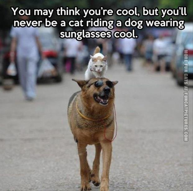 The coolest cat in the world