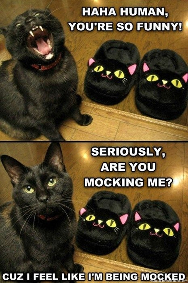 Mocking the cat