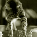 A cat bartender
