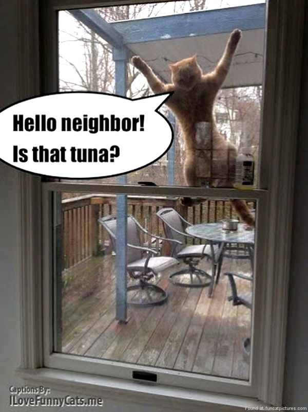 Neighborly cat