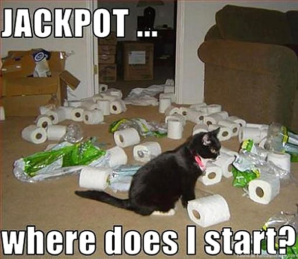 Cat won the jackpot