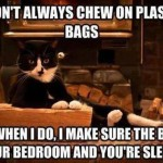 When does the cat chew on plastic bags?