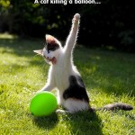 Cat killing a balloon