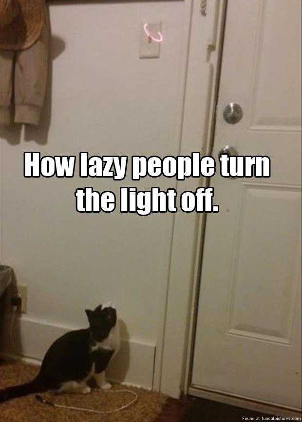 How to get a cat to turn the light off