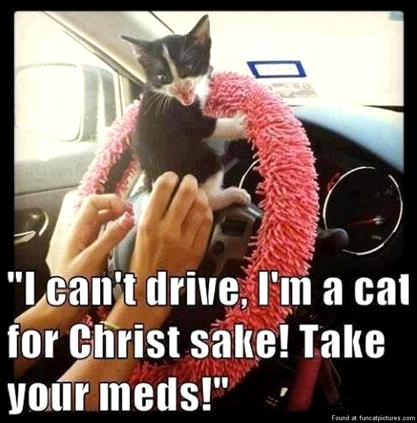 I'm a cat for Christ sake!
