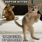 Raptor kitten is not popular