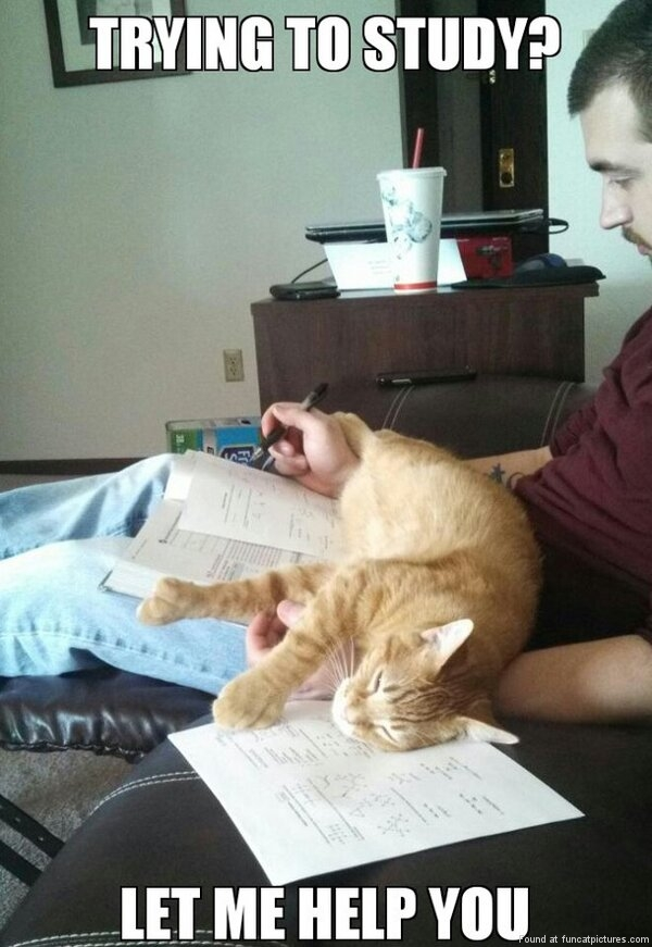 Cat helps to study