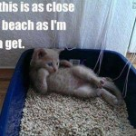 Cat dreams of the beach