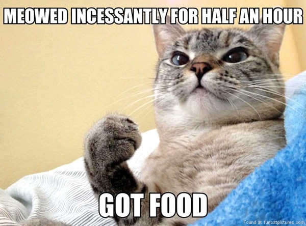 Success Cat got food
