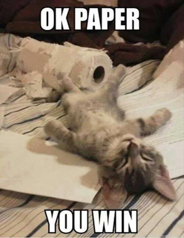Cat gives up to paper