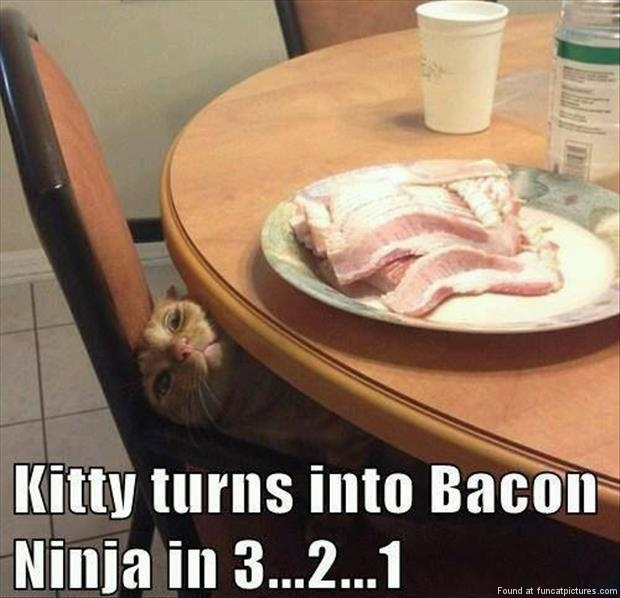 Kitty will become a Bacon Ninja