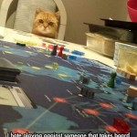 Cat takes board game seriously