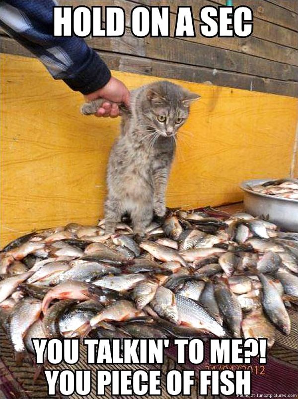 Cat looking for a fish fight