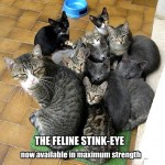 Feline stink-eye cats