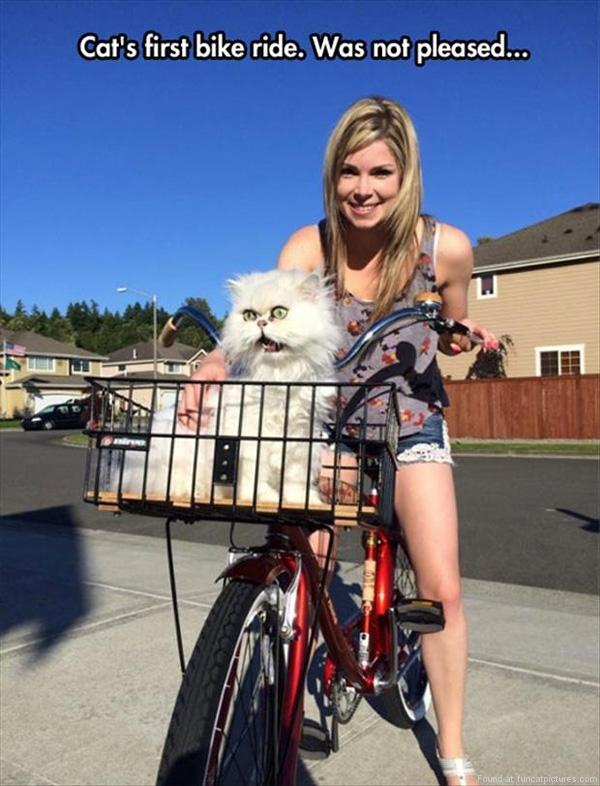 Cat's first bike ride