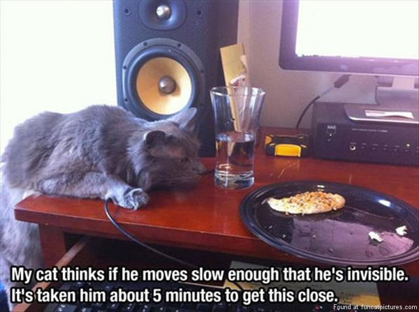 funny-cat-pictures-slow-moving-cat