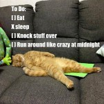 Cats todo list