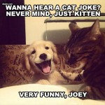 I think nothing can get this cat to laugh