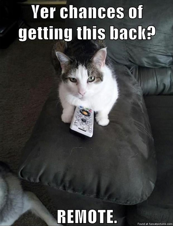 Cat got the remote