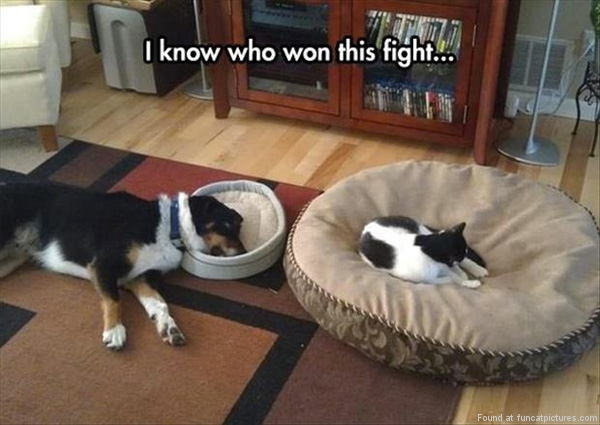 Cats will always win those battles