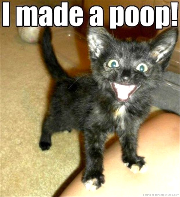 funny-cat-pictures-i-made-a-poop