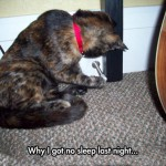 No sleep for this cats owner