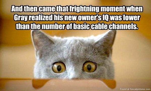 Cats moment of realization