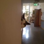 How it looks to be stalked by a cat