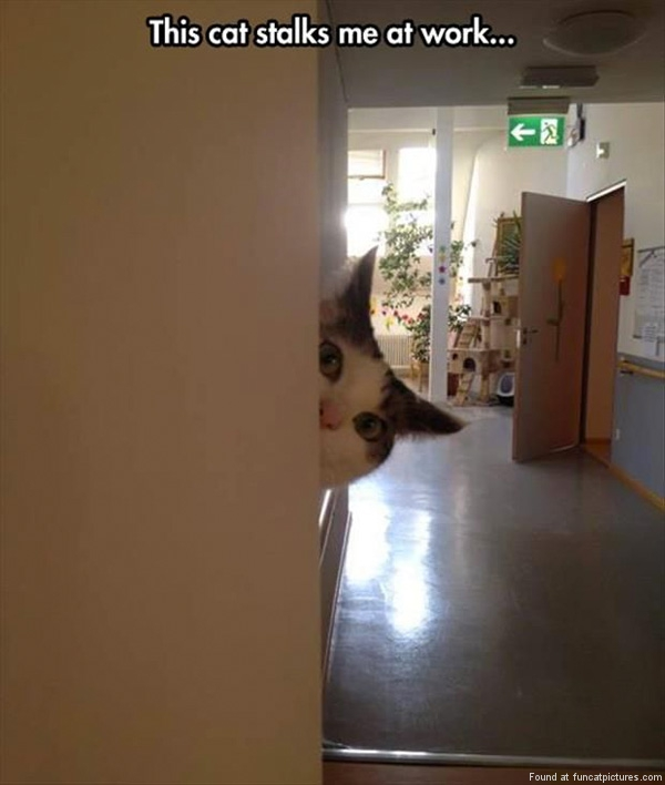funny-cat-pictures-stalker-at-work