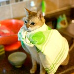 Have no fear, Supercat is here
