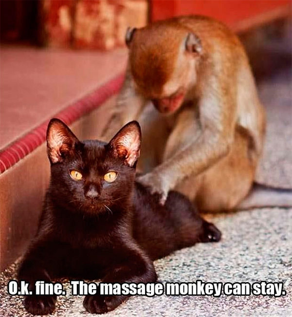 This monkey pleases the cat