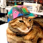 You will never be as cool as this cat!