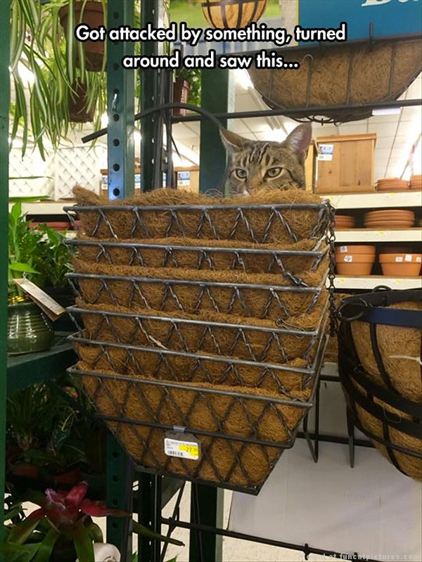 This cat masters camouflage