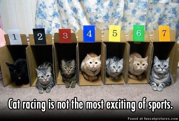 Cat racing really sucks…