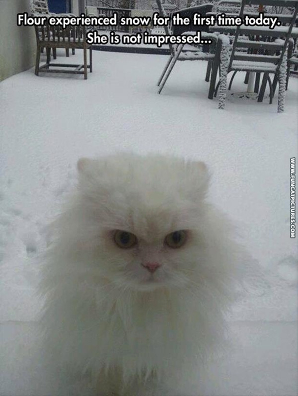 funny-cat-pictures-flour-is-not-impressed-with-snow