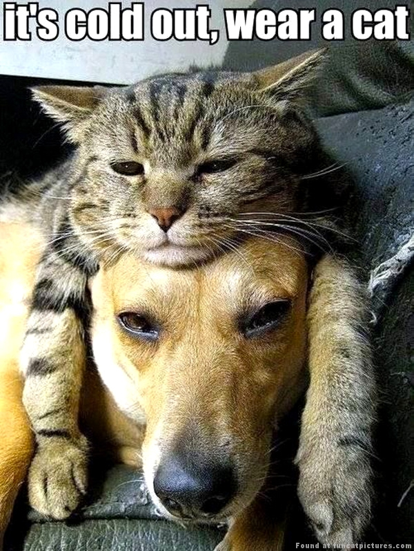 Dog with a cat hat
