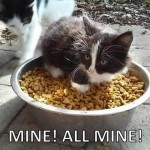 Kitten protects his food