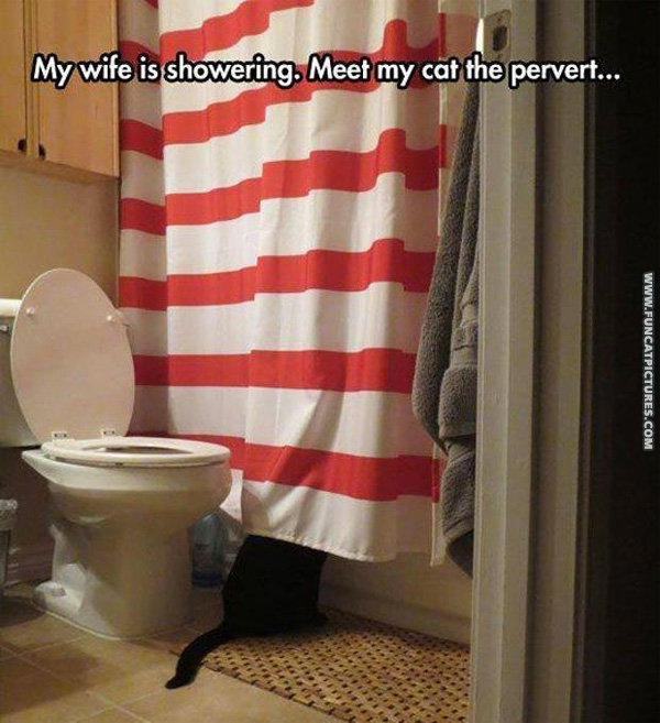 Peeping cat strikes again