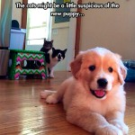 Suspicious cats are watching the new puppy