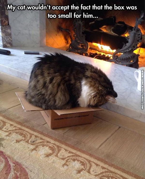 No box is to small for a cat