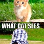 Why cats think we're stupid