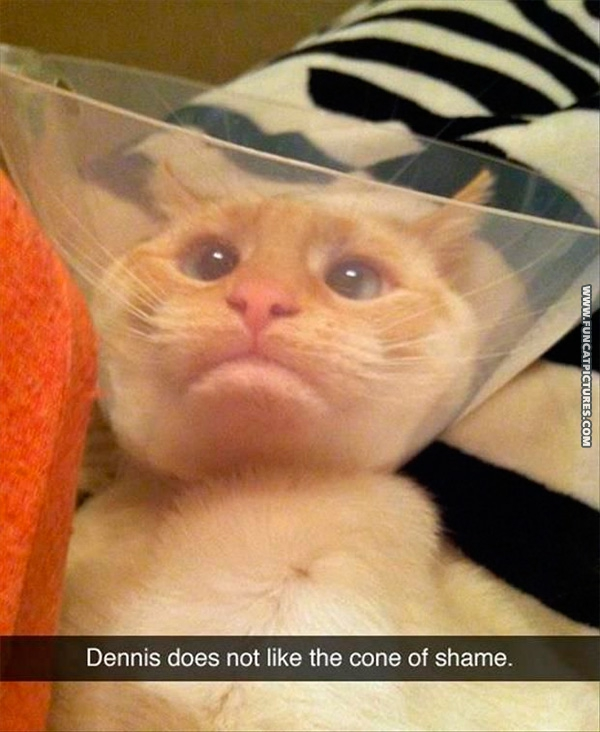 funny-cat-pictures-cone-of-shame