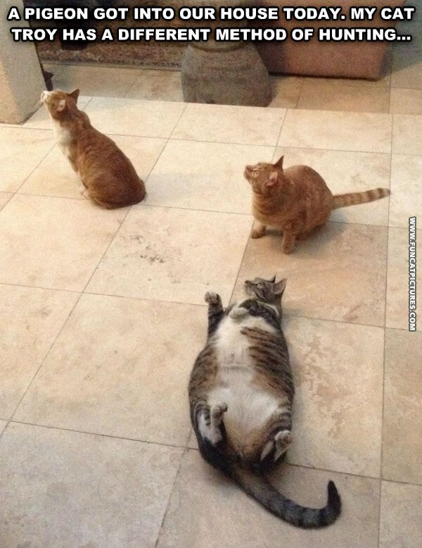 funny cat pictures different method of hunting