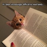 It's hard to read when you got a cat