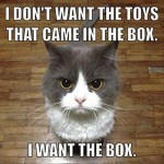 Cats only want the box