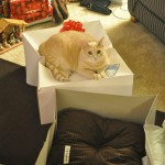 Expensive gift doesn't impress my cat