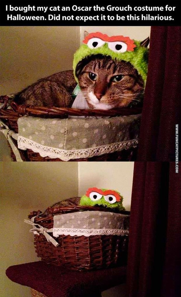 Cat in Oscar the Grouch costume