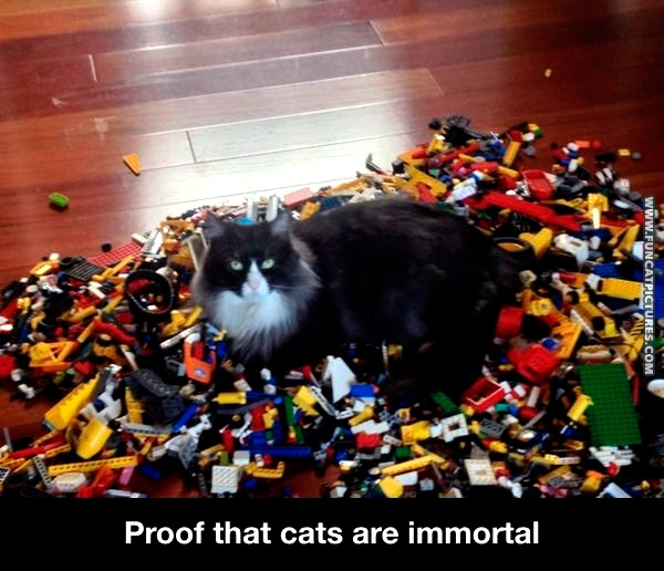 Cats are immortal and here's the proof