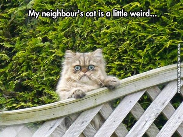 Neighbor's got a wierd cat