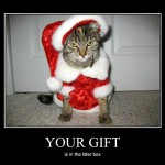 Cat santa isn't very nice